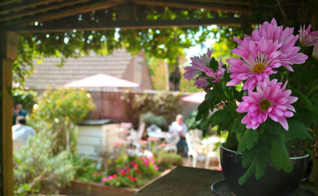 pink flowers and garden at Pooh Corner
